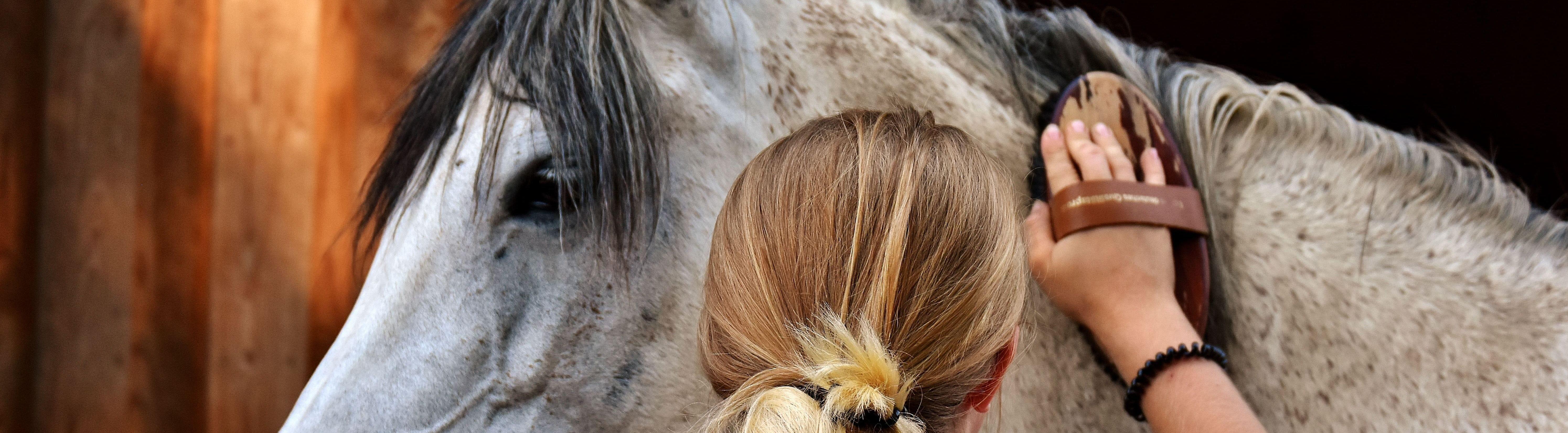 Pansage et soins du cheval