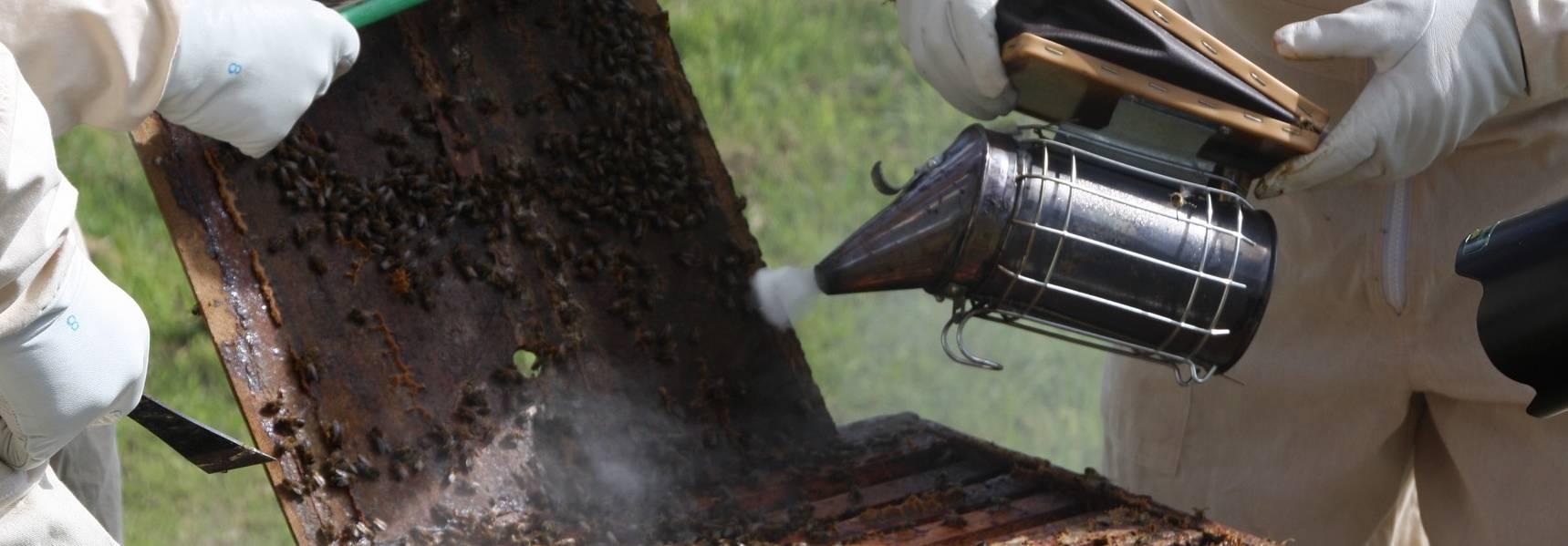 Equipement au rucher