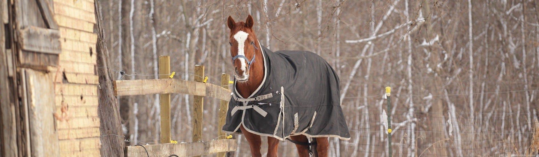 Equipement du cheval