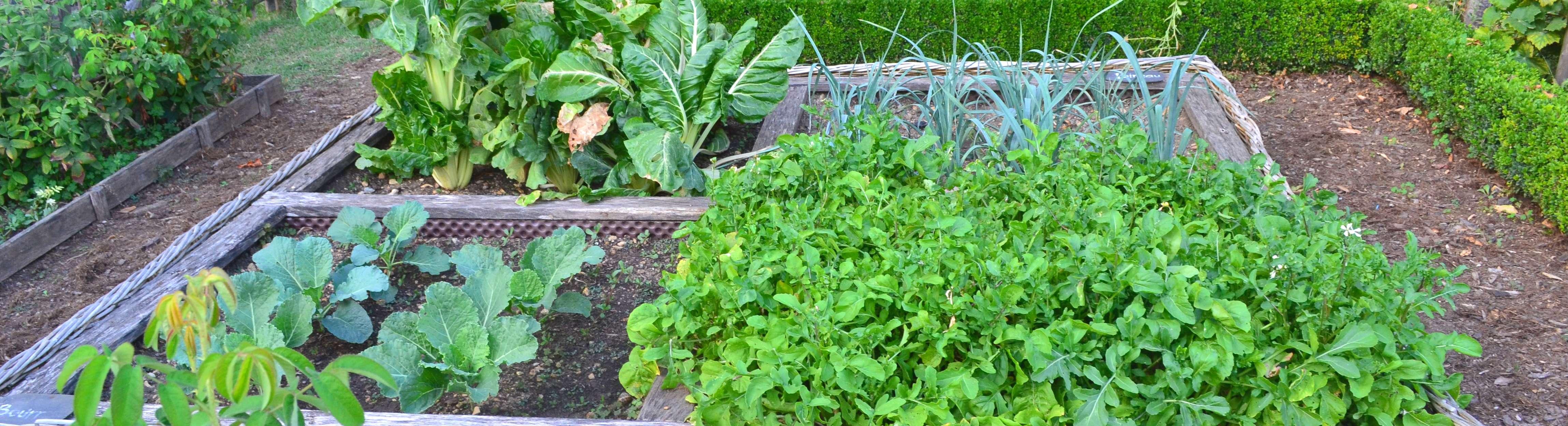 Equipement du potager, récolte et stockage