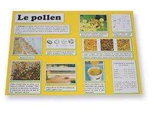 Planche d'information Le pollen