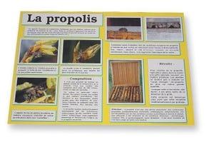 Planche d'information La propolis