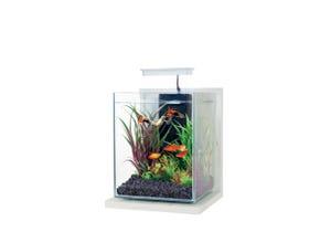 Kit aquarium Jalaya équipé - 9,3 L - Cérusé blanc ZOLUX