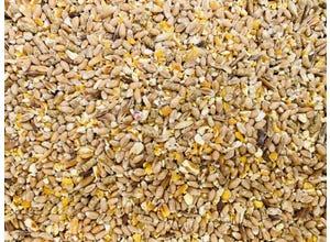 Mélange de graines pour poules pondeuses
