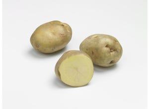 Pomme de terre Clayette SITERMA