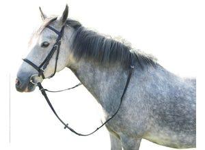 Bridon cuir huilé cheval