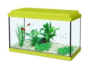 Aquarium nanolife kidz 18L - 40x20x25cm vert