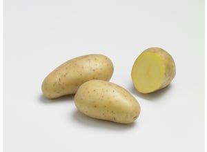 Pomme de terre ALLIANS 1,5kg