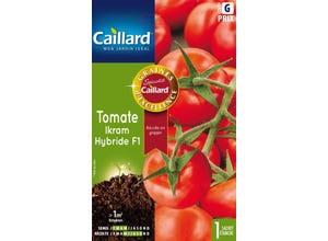 Tomate Ikram hybride F1