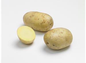 Pomme de terre AGATA 28/35