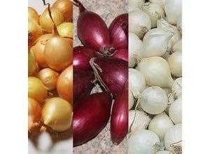 Oignon mix tricolore