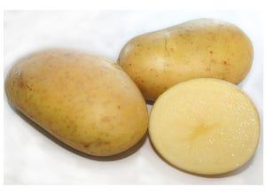 Pomme de terre PASSION 1,5kg