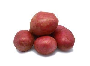 Pomme de terre ALOUETTE Clayette 60
