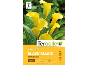 Arums BLACK MAGIC