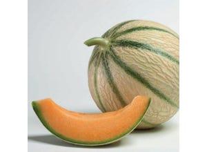 Melon Anasta - le pot de 0.5 litre