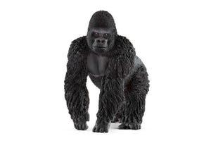 Gorille, mâle
