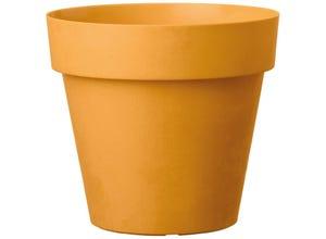 Vaso like curry