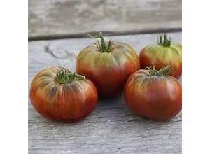 Tomates anciennes variées