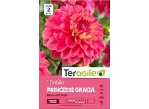 Dahlia PRINCESSE GRACIA