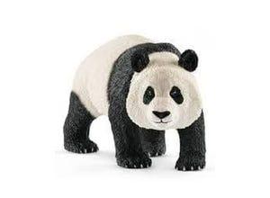 Panda géant, mâle