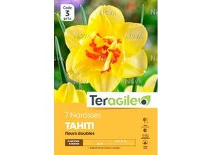 Narcisse Tahiti Fleurs Doubles (x7) - TERAGILE