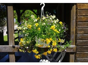 Suspensions mixte fleurie