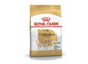 Chihuahua adult - 1,5kg