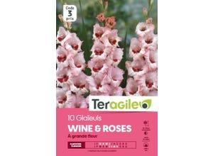 Glaïeuls WINE & ROSES