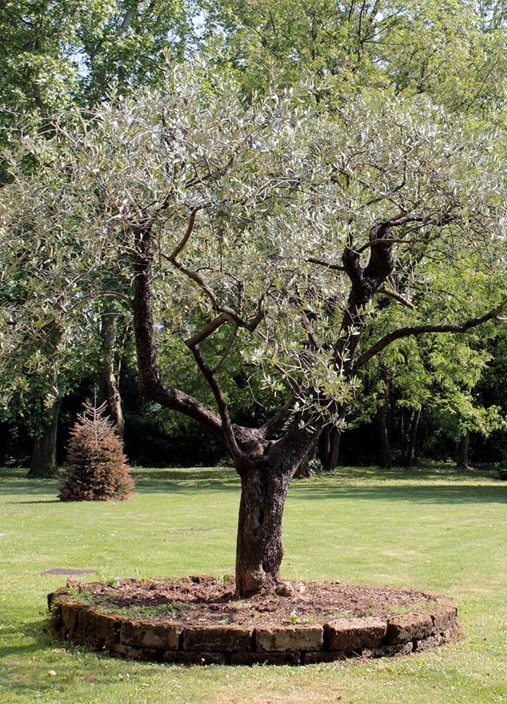 jardin avec arbre d'ornement