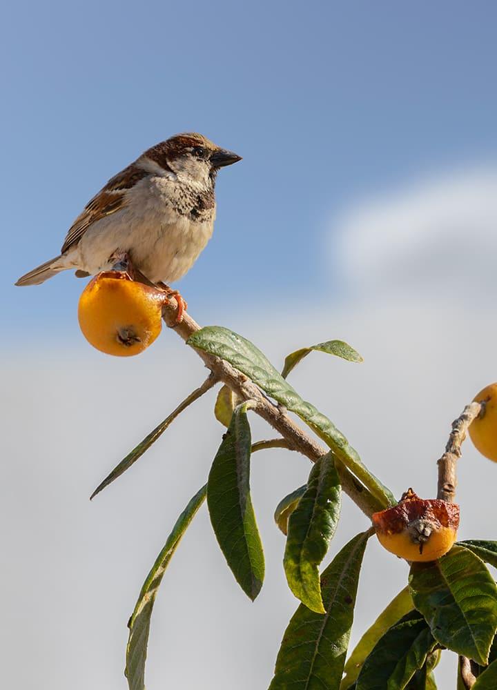 arbre fruitier jardin avec oiseau