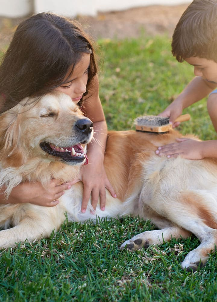 brossage poils du chien