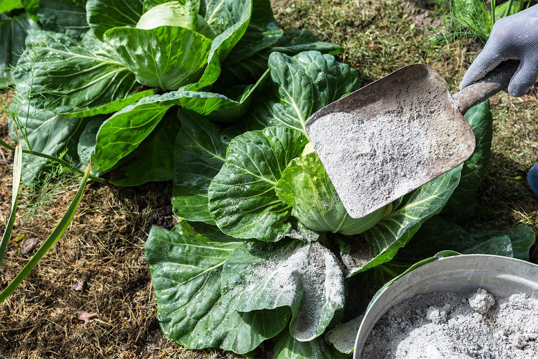 cendres produit naturel pour plantations