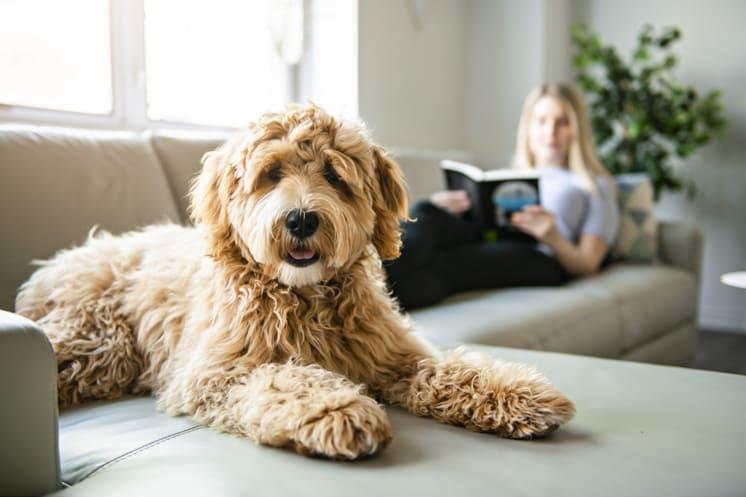 moment détente avec chien salon