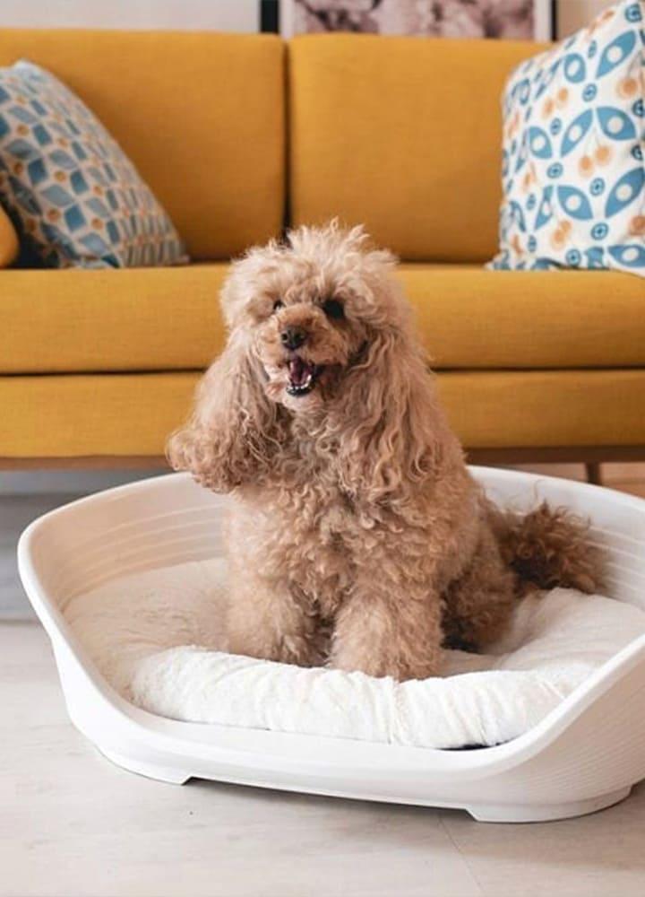 corbeille en plastique pour chien