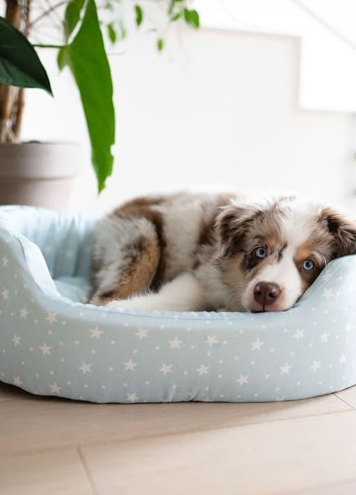 corbeille en tissu pour chien