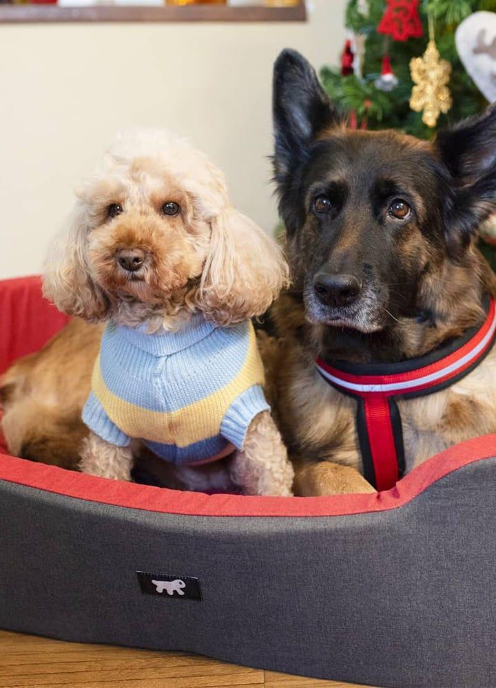 couchage spacieux pour chien