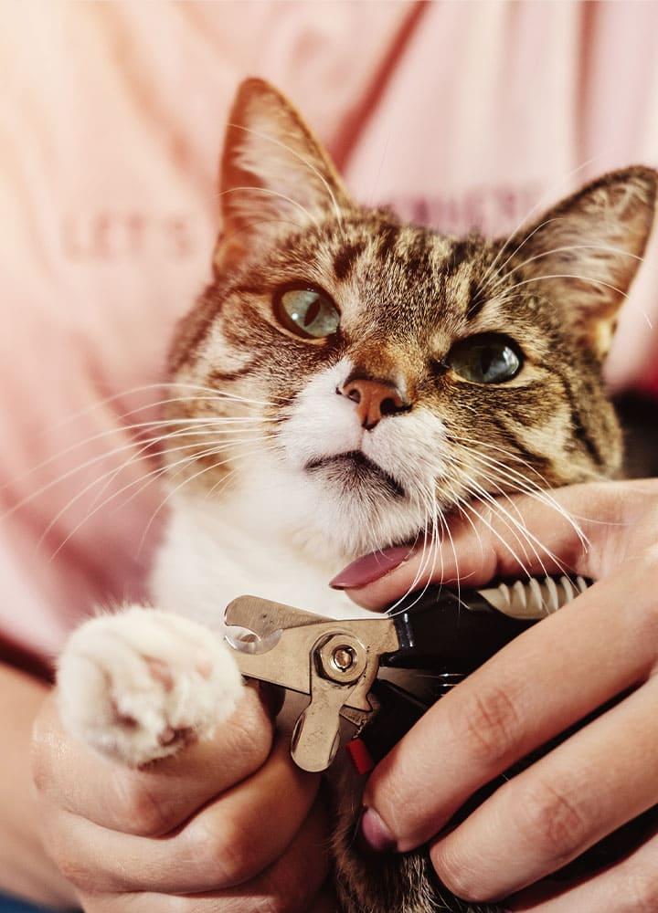coupe des griffes chat