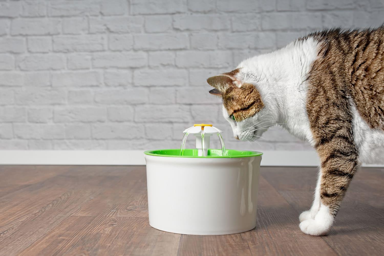 hydratation chat avec fontaine à eau