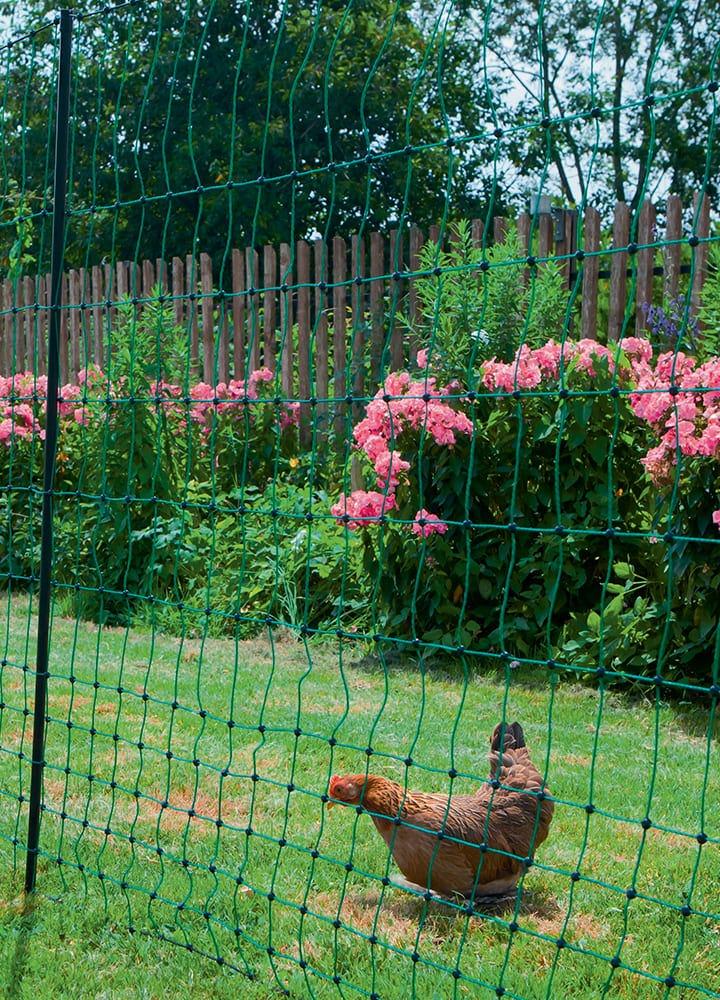 filet de délimitation d'espace pour poules
