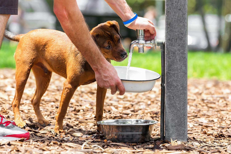 hydratation chien avec gamelle à eau