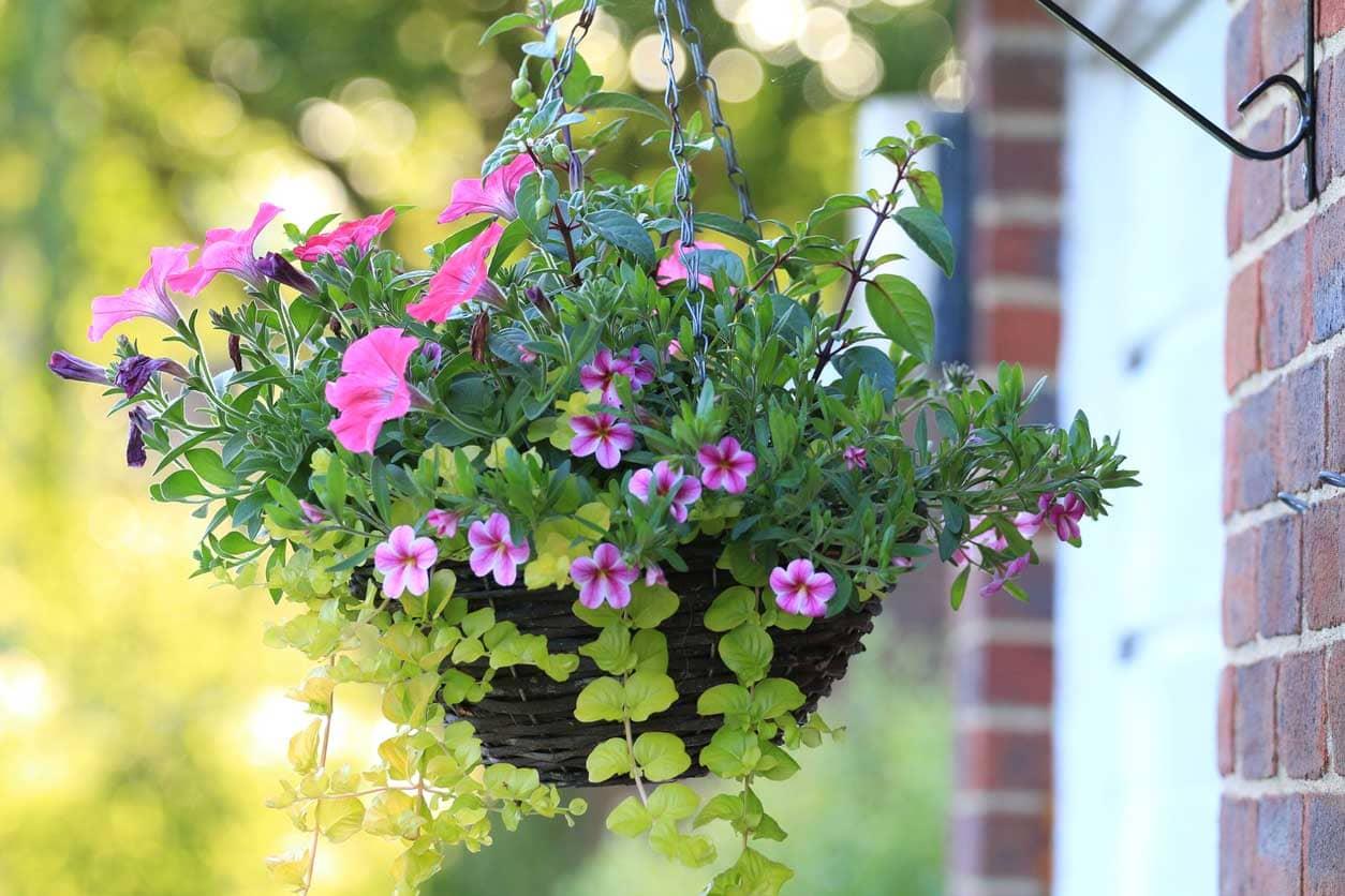 jardinière plantes jardin