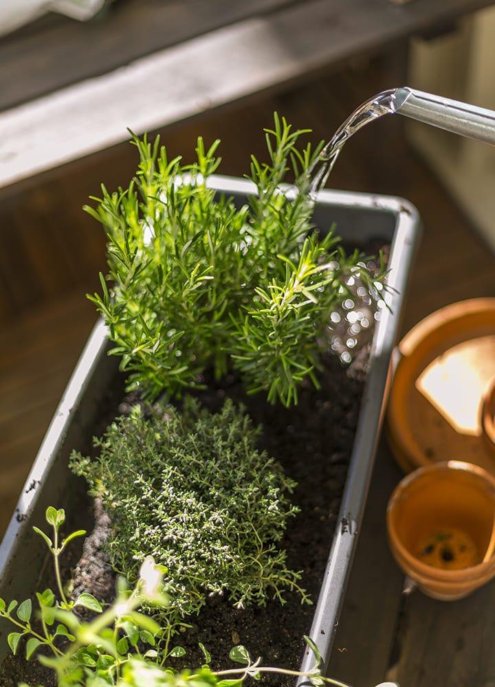 jardiniere rectangulaire pour plantation aromatiques