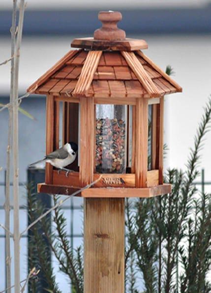 mangeoire graines oiseaux jardin