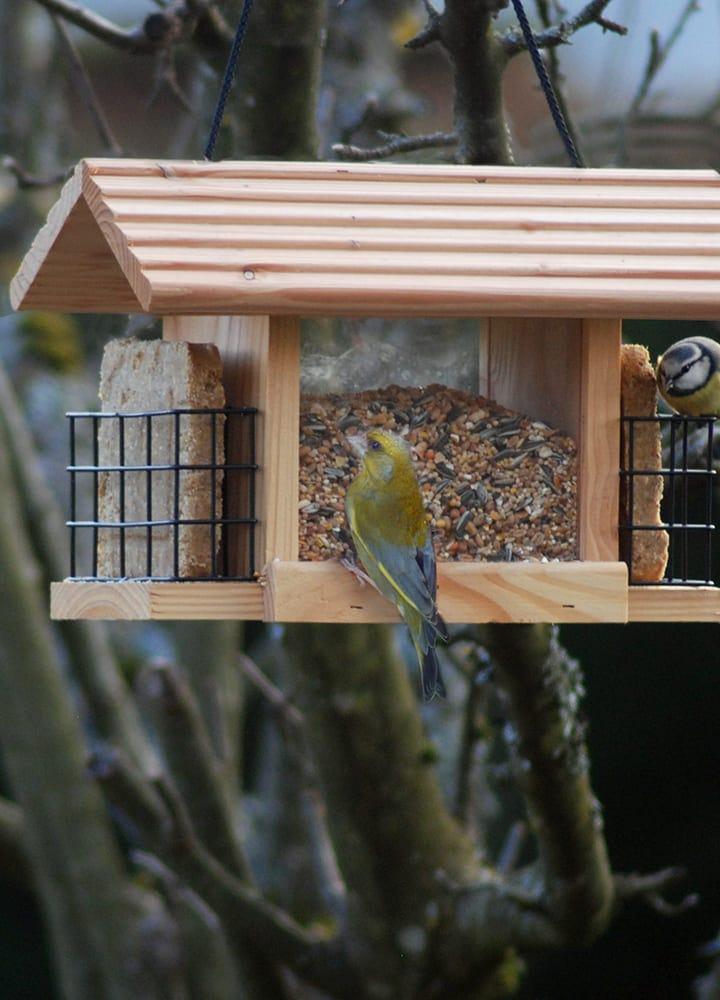mangeoire alimentation oiseau