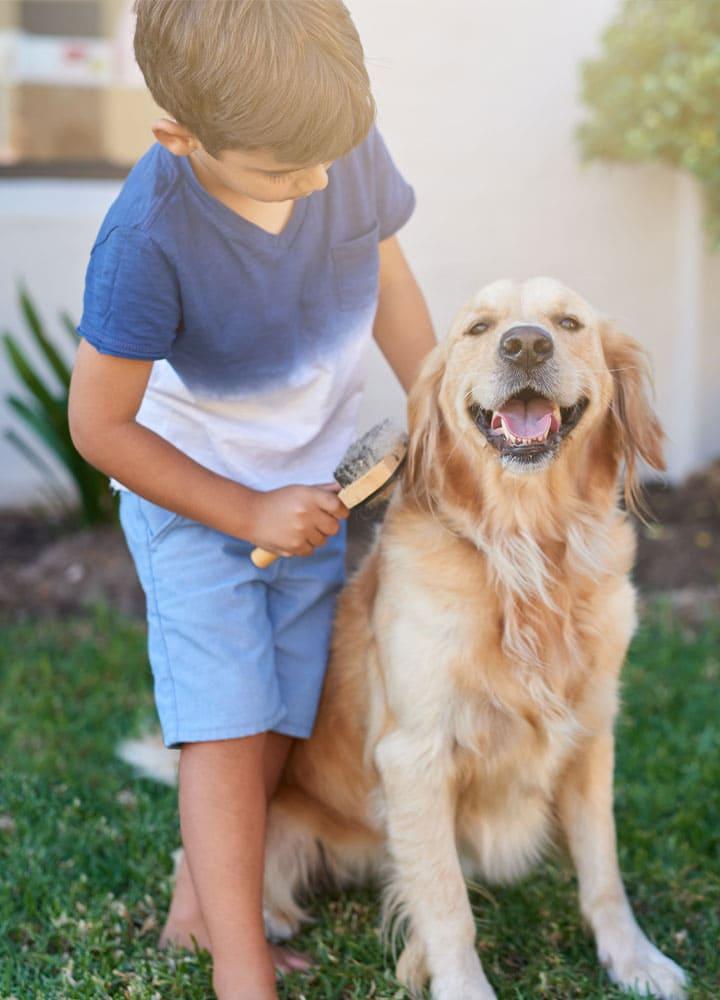 toilettage oreilles et yeux chiens