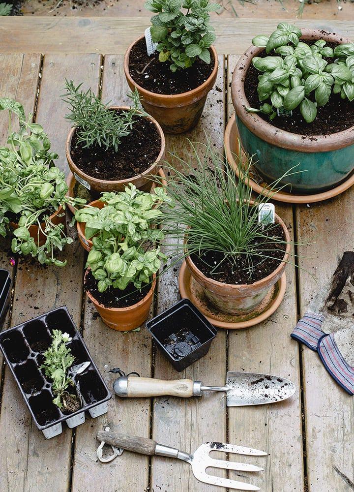 outils taille réduite jardinage