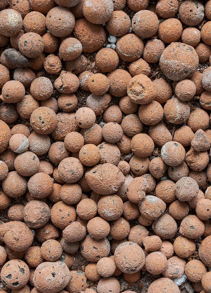 paillage minéral billes d'argile pour plantations