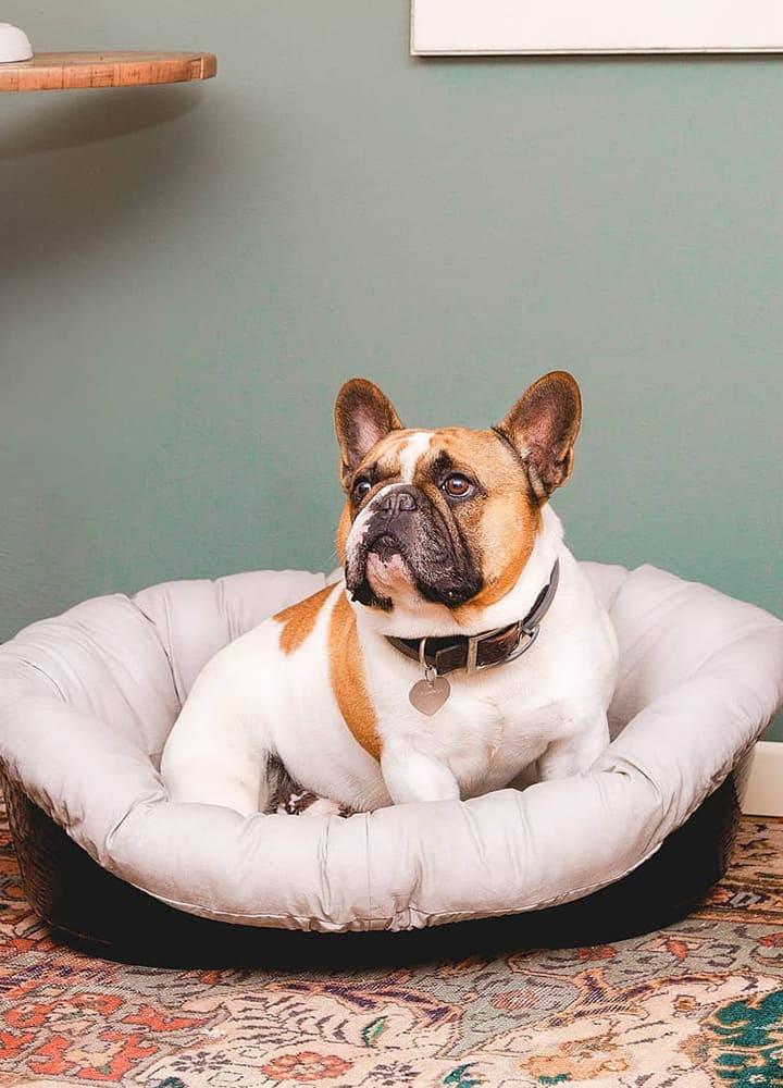 panier pour chien avec coussin rembourré