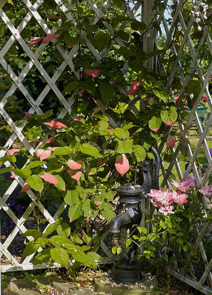 brise vue panneaux treillis fleuri