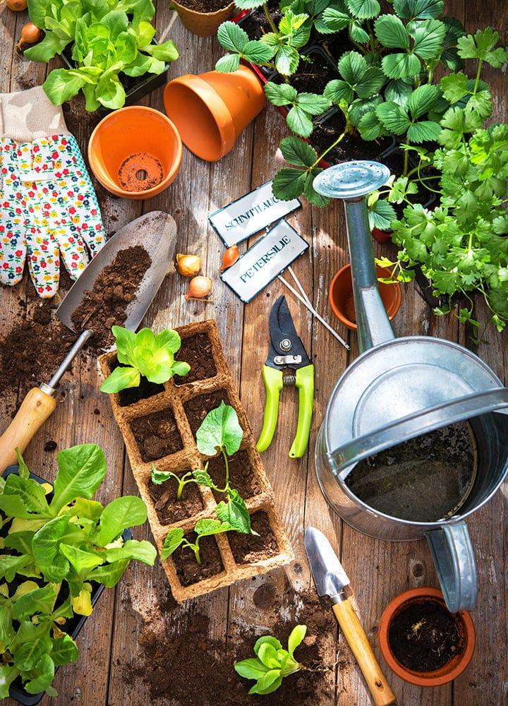 jardinage légumes semis